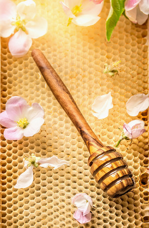 honey comb: Honey Dipper wooden on honeycomb with fresh blooming top view close up