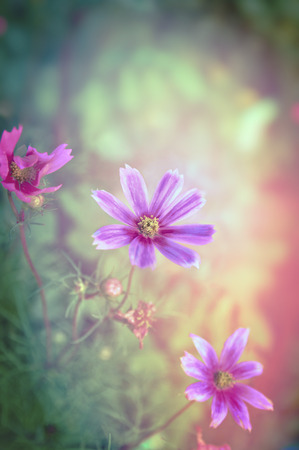 improbable: Pink flowers on magicgarden background toned Stock Photo