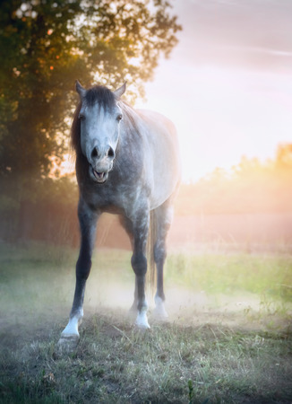 funny image: young gray horse yawn on morning summer pasture