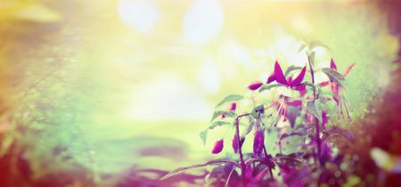 Garden fuchsia flowers on sunshine bokeh background toned outdoor banner for website