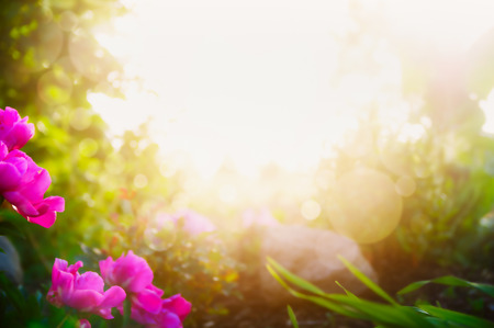Blurred garden or park background with pink flowers and sunshine