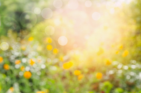 improbable: Flowers Garden or park blurred nature background