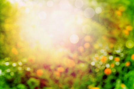 improbable: Blurred summer garden or park nature background with sunlight and bokeh Stock Photo