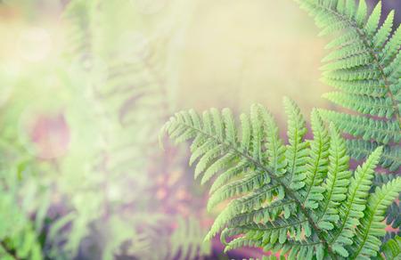 Groene varenbladeren op vage gestemde aardachtergrond