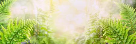Fern bladeren op onscherpe aard achtergrond banner voor website Stockfoto
