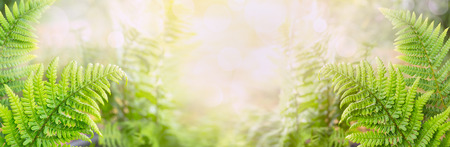 Fern leaves on blurred nature background banner for website
