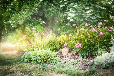 Summer garden with peony bush nature background