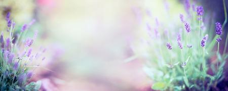 Fijne lavendel bloemen en bloeiende plant op onscherpe aard achtergrond banner voor website Stockfoto