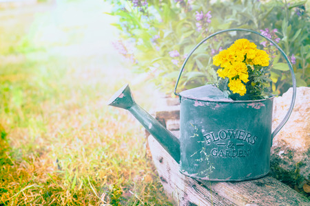 pot light: Old green watering pot with yellow flowers on summer garden background toned