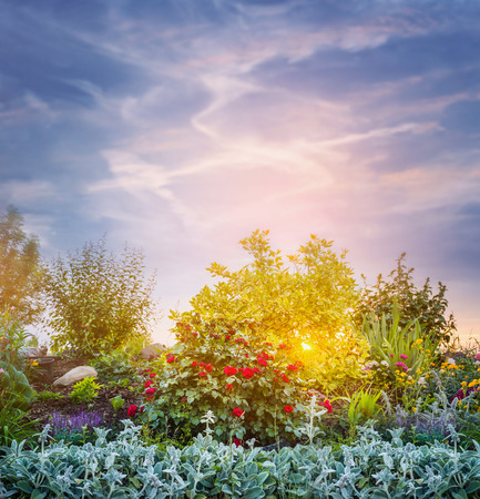 flower beds: Sunset evening in flowers garden or park on sky background