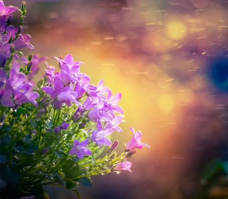 bluebell: bluebell flowers on sunset nature background Stock Photo