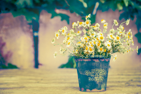 flower garden path: old bucket with daisies flowers bunch on wooden table over garden wall background