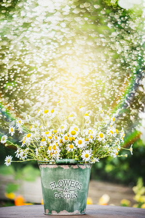 water grass: bucket with daisies flowers on garden table over water spraying background