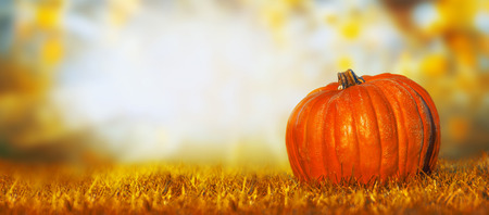 Big pumpkin on lawn over autumn nature background, banner for website
