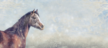 beautiful arabian horse on snow winter background, banner for website, toned