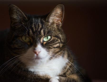 cat eye: Close up portrait of domestic cat on dark background