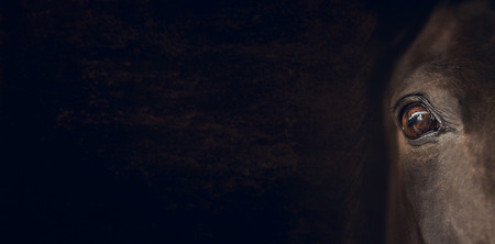 Horse eye on dark brown background, banner for website