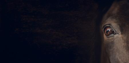 caballos negros: Ojo del caballo en el fondo de color marrón oscuro, la bandera para el sitio web