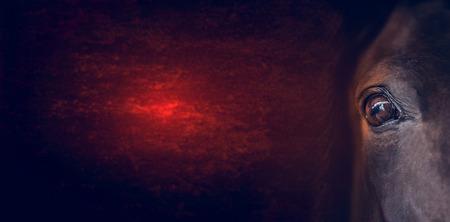 Oeil de chevaux sur fond rouge foncé, bannière pour le site Web Banque d'images - 42778697