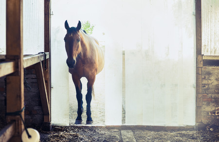 light brown horse: Old horse at the entrance to the stables with vertical blinds