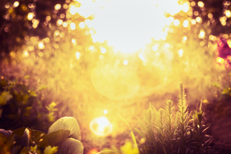 amarillo: Jardín de la puesta del sol borrosa o fondo parque natural