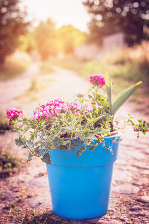 stile: Blue pot with garden flowers on summer or autumn nature background. Country stile.