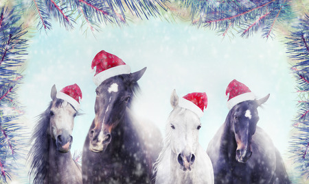 country christmas: Herd of horses with Santa hat on winter snow and Christmas tree background. Banner for website. Stock Photo