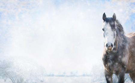 雪のある冬景色、バナーのウェブサイトのための灰色の馬。
