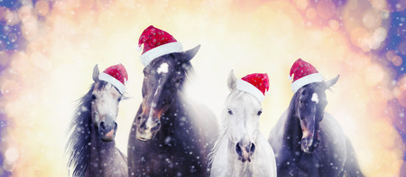 country christmas: Christmas horses with Santa hat on snow bokeh background