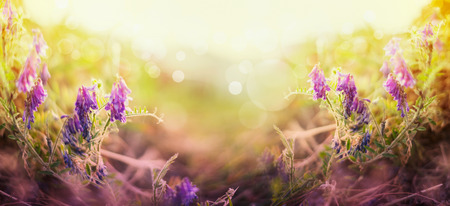vetch: Blurred nature background with vetch flowers Stock Photo