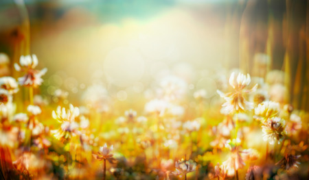 soft colors: Autumn or summer blurred nature background , banner for website, toned