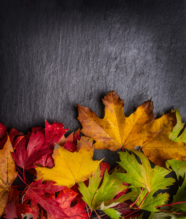 autumn grunge: Autumn background with colorful autumn leaves on dark slate, top view Stock Photo