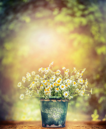 color: wild daisies in retro bucket on wooden table over beautiful nature background