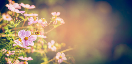 fields of flowers: Beautiful flowers on garden or park nature background, banner Stock Photo