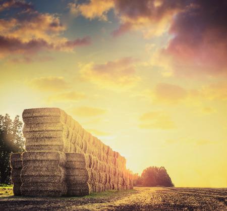 干し草またはわら俵美しい夕焼けの背景を持つフィールド。 写真素材