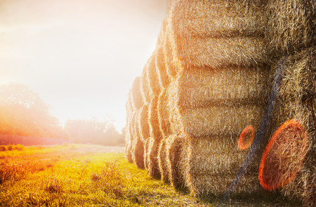 harvest bales of straw on sunset nature background