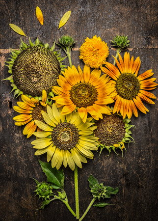 composing: Sunflowers composing on rustic wooden background, top view Stock Photo