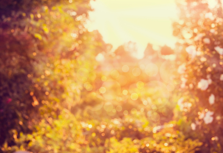 garden design: Blurred autumn nature background with sun light and bokeh Stock Photo