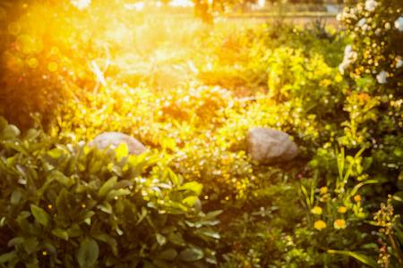 Sun flower: Unschärfe Herbst oder Sommer Natur Hintergrund im Garten oder Park in Abendlicht Lizenzfreie Bilder