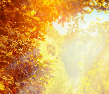 Wazig aard achtergrond met mooie zonnige herfst bladerdek in het park Stockfoto