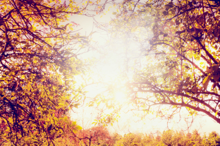autumn colour: Autumn trees with colorful leaves and sun light, blurred nature background Stock Photo