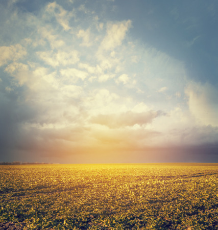 autumn or summer field landscape with amazing sky,blurred nature background
