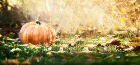foliage: Beautiful pumpkin over fall landscape with lawn , trees and foliage. Autumn harvesting nature concept. Banner.