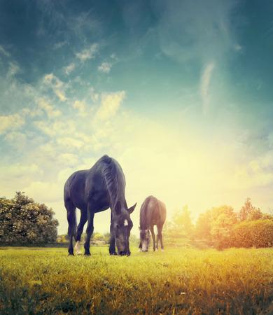 caballo: Caballos que pastan en el prado del otoño en el fondo de los árboles y el cielo, entonado