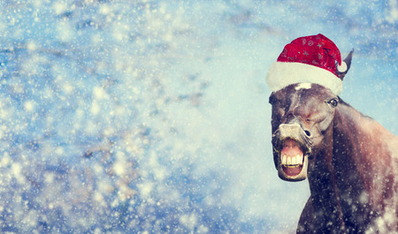 Funny Christmas  horse with Santa hat smiling and looking into camera on winter snow fall background , banner,  toned Standard-Bild