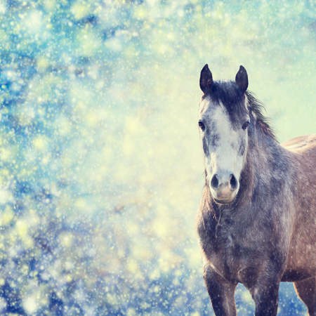Beautiful  gray horse portrait on winter background of snow-fall,  toned Standard-Bild