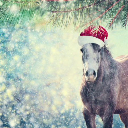 Beautiful  sweet Horse with Santa hat on Christmas background of snow and spruce branches, toned