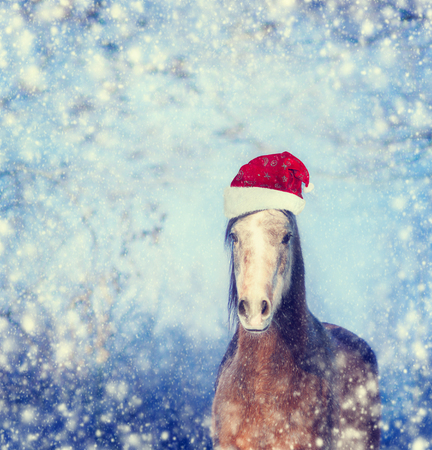 christmas fun: Horse with Santa hat on winter snowflakes Christmas background,  toned