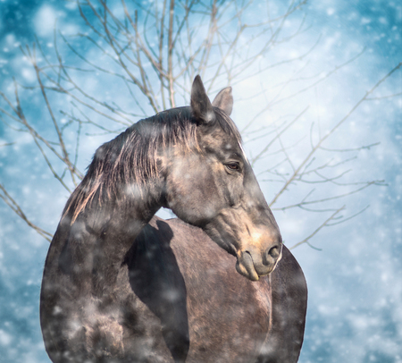 light brown horse: beautiful black horse on blue winter snow fall background