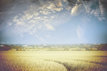 finnish: Wheat field with tractor tracks and beautiful sky , blurred nature background, toned